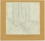 Trees - A Sequoia Ditch Where the Great Tree Has Lain, and Been Burned Away