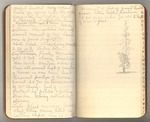 June-July 1901, Trips to Boulder Creek and Giant Forest Image 4
