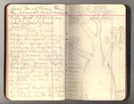 November 1911-March 1912, Trip to South America, Part III, and Trip to Africa Image 28 by John Muir