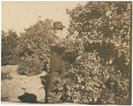 John Muir in orchard, probably near his home, Martinez, California