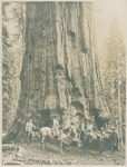 James S. Merriam, Wanda Muir, Helen Muir, Henry Gannett, and John Muir with General Sherman tree at Sequoia National Park, California