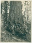 John Muir (second from right) and President William Howard Taft (sixth from right) with unidentified group at Wawona Tree, Yosemite National Park, California