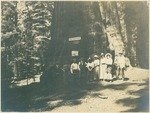 John Muir (fourth from left) probably with Sierra Club group at the General Sherman tree, Sequoia National Park, California