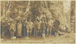 Theodore Roosevelt and John Muir (fifth and sixth from left) with unidentified men at Grizzly Giant, Mariposa Grove, California