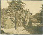 John Muir (second from left) 'stealing oranges' with Mr. and Mrs. Harriman in Pasadena, California