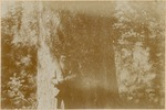 John Muir by Sugar Pine, Yosemite, California