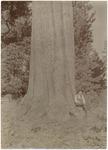 John Muir by Sugar Pine, Dorrington ('Gardiner's'), California