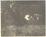 John Muir by Oak ('agrifolia') Martinez, California