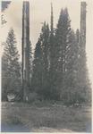 John Muir at Redwood Meadow, Sequoia National Park, California