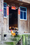 Rooster and chickens on a stoop by Marie Anna Lee