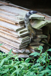 Cat disappearing into a woodpile by Marie Anna Lee