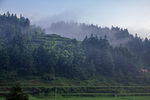 Forested mountain with fog by Marie Anna Lee