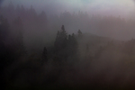 Fog obscuring trees by Marie Anna Lee
