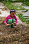 Girl thrashing rapeseed plants to separate the seed from the chaff by Marie Anna Lee