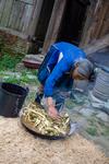 Wu Meitz arranging mulberry bark in wok by Marie Anna Lee