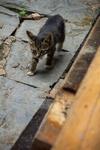 Kitten by Marie Anna Lee