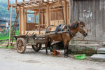 Horse-drawn cart and chicken by Anastasya Uskov