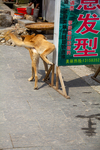 Dog in Liping by Marie Anna Lee