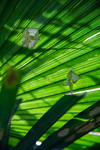 Palm fronds by Marie Anna Lee