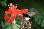 Butterfly on flower by Anastasya Uskov
