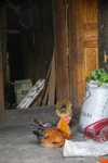 Chickens by Marie Anna Lee