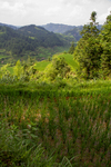 Paddy fields by Marie Anna Lee