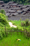 Weeding a paddy field by Marie Anna Lee