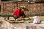 Woman thrashing rapeseed plants by Marie Anna Lee