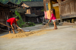 Drying rice by Marie Anna Lee