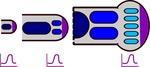 Model for Tetrapod Limb Development by Ajna Rivera