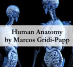 Human Anatomy by Marcos Gridi-Papp