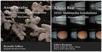 Ness: Multimedia Installations